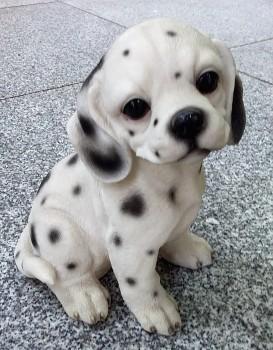 Dalmatin 21cm