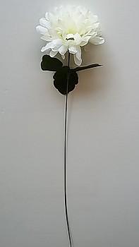Chryzantema  x1 - 45 cm, květ 10cm