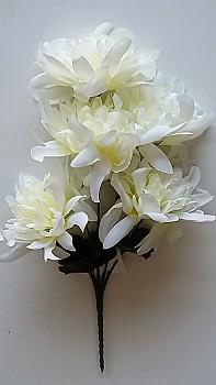 Chryzantema  x5 - 30 cm, květ 13cm