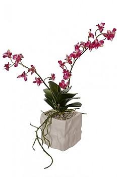 Orchidea v květináči 12x12x42cm BEAUTY