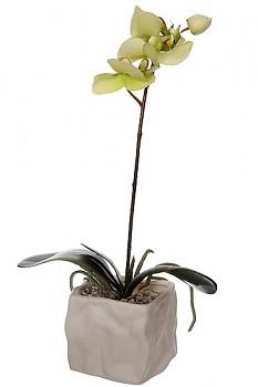 Orchidea v květináči 8x8x31cm GREEN