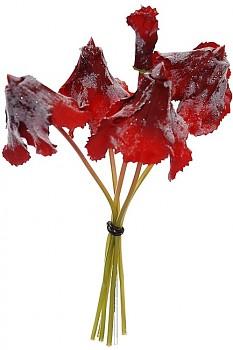 Brambořík omrzlý 28cm svazek RED